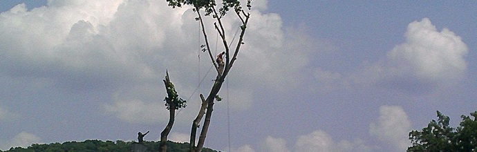Tree-care-sub-header