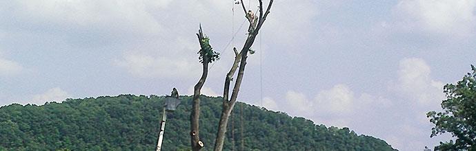 Tree-removal-subheader